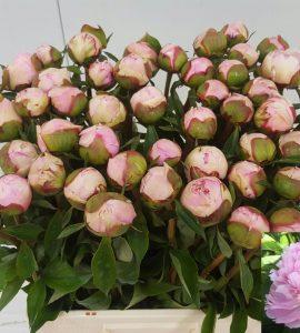Angel Cheek_kuip met bloem